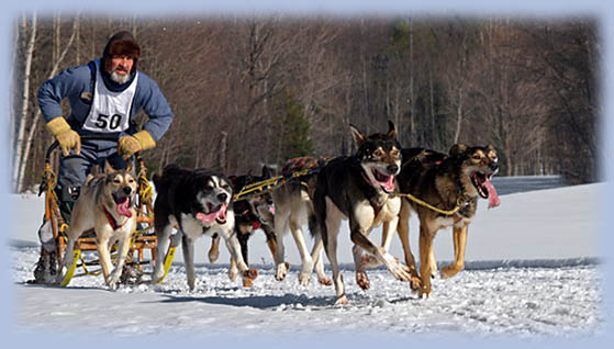 Haliburton Highlands Dogsled Derby